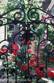 Decorative iron gate